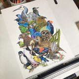 """Perchin"" NZ Birds Print"