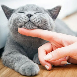 10 Tips for getting your cat to like you!