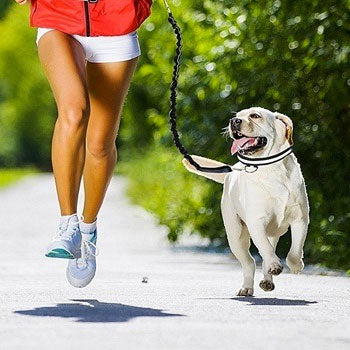 Hands Free Elastic Dog Leash - petilly.com