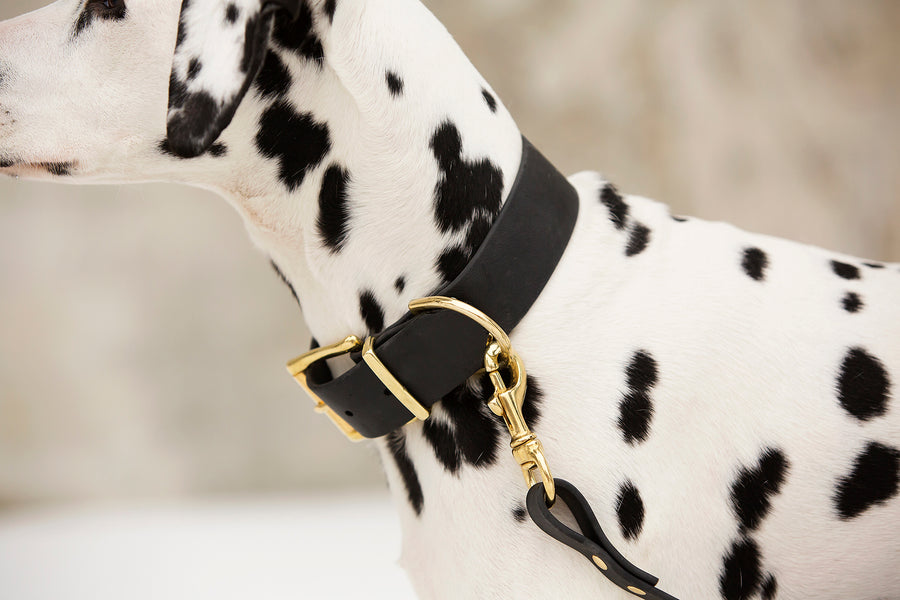 Design Your Own - Biothane & Brass Leash