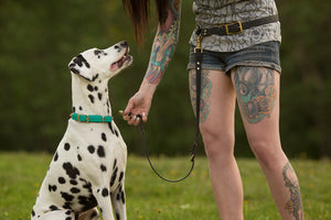 Extra Leash Attachment for Waist Leash - Hands Free Convertible Biothane Leash Set