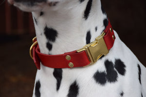 The Elessar QR Collar: Natural Tan & Brass Quick Release Leather Dog Collar