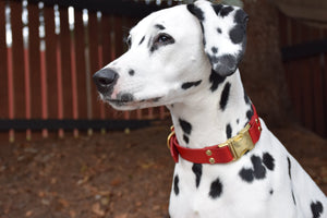 The Elessar QR Collar: Red & Brass Quick Release Leather Dog Collar