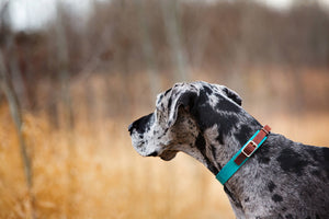 The Rohirrim Collar: Walnut & Pink Adjustable Leather Martingale Dog Collar