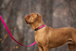 The Anduril Collar: Pink Adjustable Leather Martingale Dog Collar