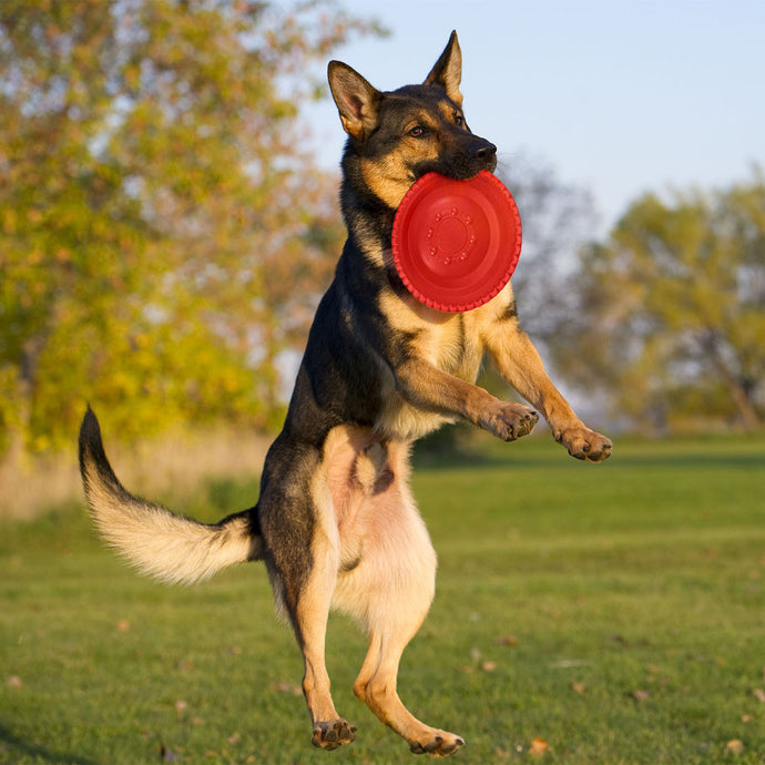 Frisbee Outdoor Training Toy for Dogs