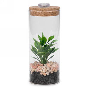 Led glass plant with cork top 2 designs