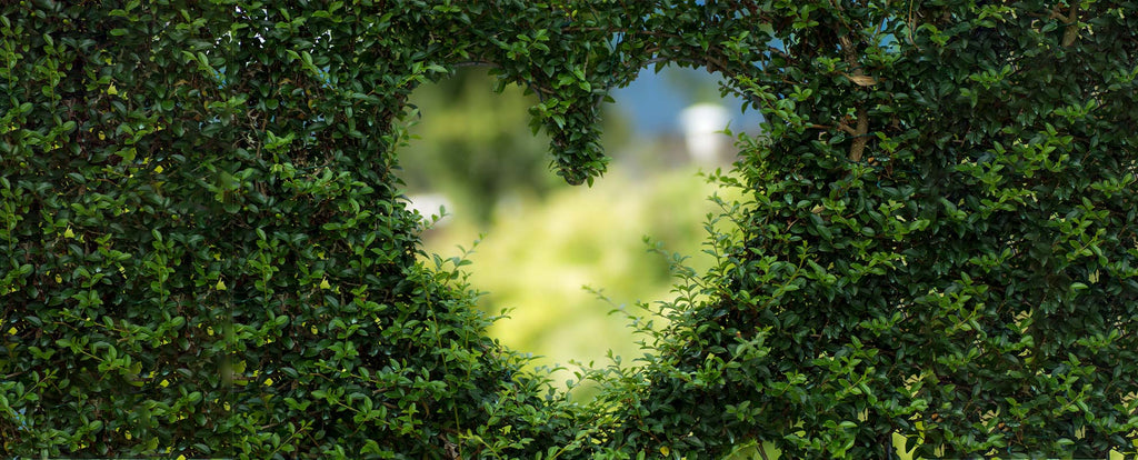 A bush with a heart-shaped hole