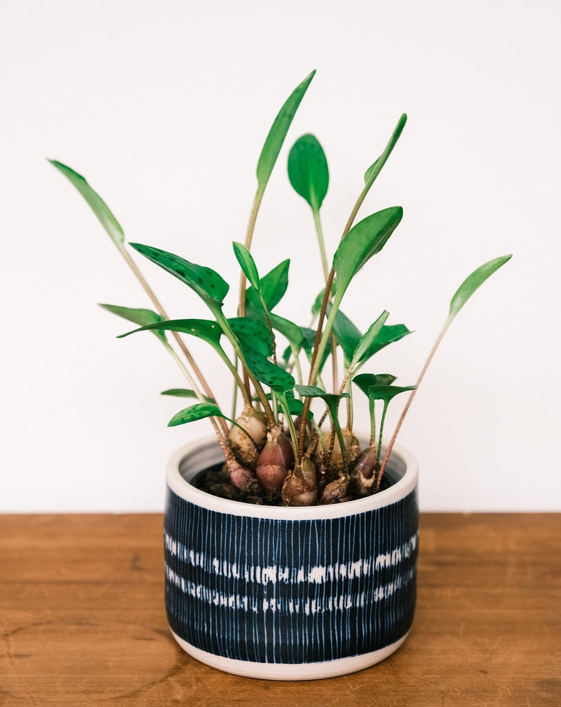 Blue Steel Small Planter by TRADE the MARK