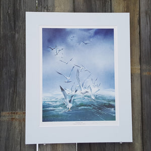 SIGNED Art PRINT ~ Howard CONNOLLY ~ SEAGULLS Seascape *