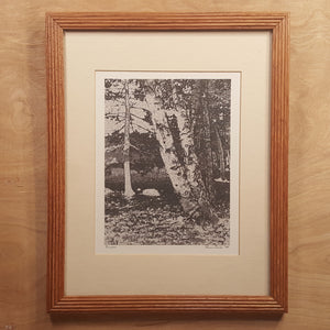 SIGNED Art Photography Print ~ BIRCH TREES  ~ Karin Smith, Connecticut Artist *