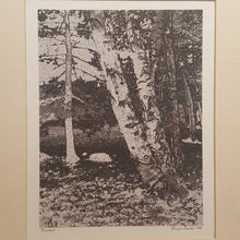 Load Image into Gallery Viewer, SIGNED Art Photography Print ~ BIRCH TREES  ~ Karin Smith, Connecticut Artist *