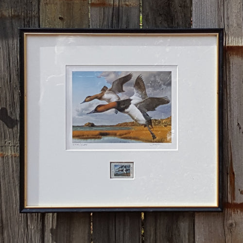 1989 SIGNED Art PRINT + STAMP ~ ROBERT STEINER ~ Rhode Island DUCKS