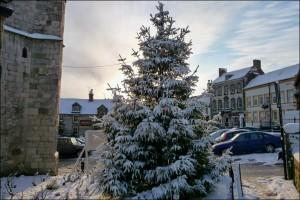 Tree care in the snow: How to look after your tree this winter