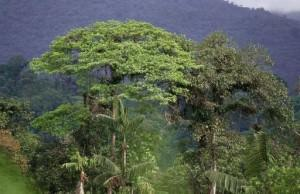 Rainforests in decline (and why all tree planting is not equal)