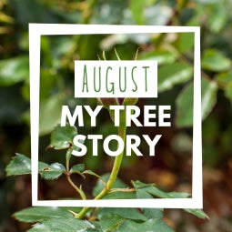 August MyTree Story - Ruby 40th Wedding Rose Bush Gift