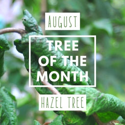 August Tree of the Month 2019 - Hazel Tree Gift