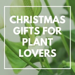 Christmas Gifts for Plant Lovers