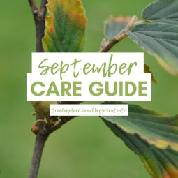 Gardening Jobs for September
