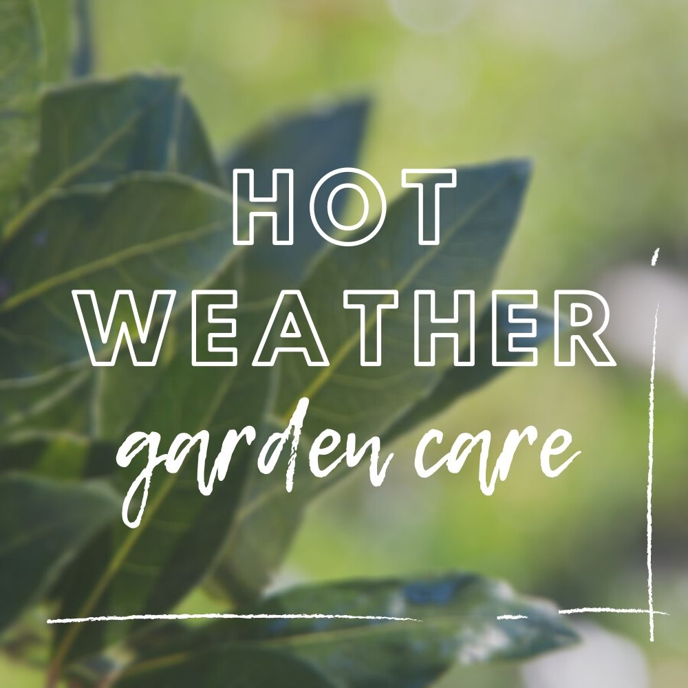 Heatwave Gardening | Hot Weather Garden Care