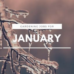 Gardening Jobs for January