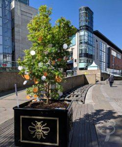 Manchester Tree of Hope Trail