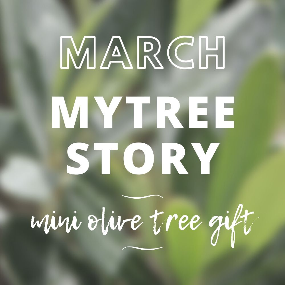 March MyTree Story - Mini Olive Tree Gift