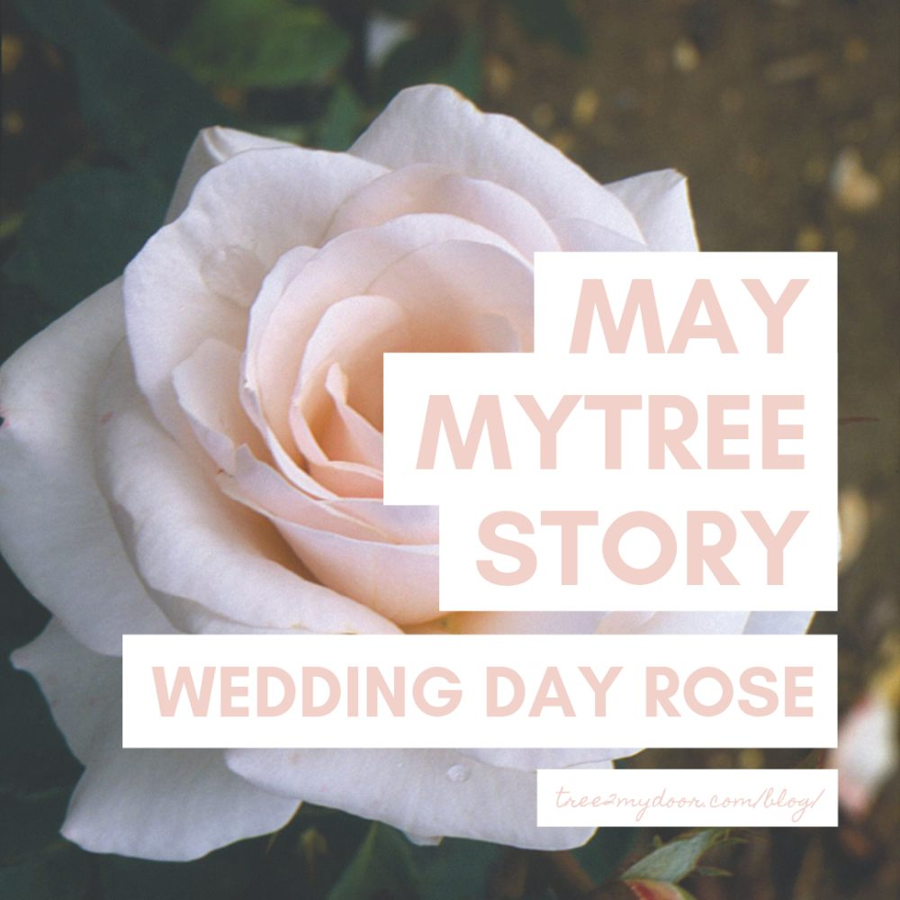 May MyTree Story | Your Wedding Day Rose Bush