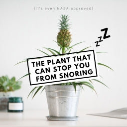 The Plant that Stops Snoring