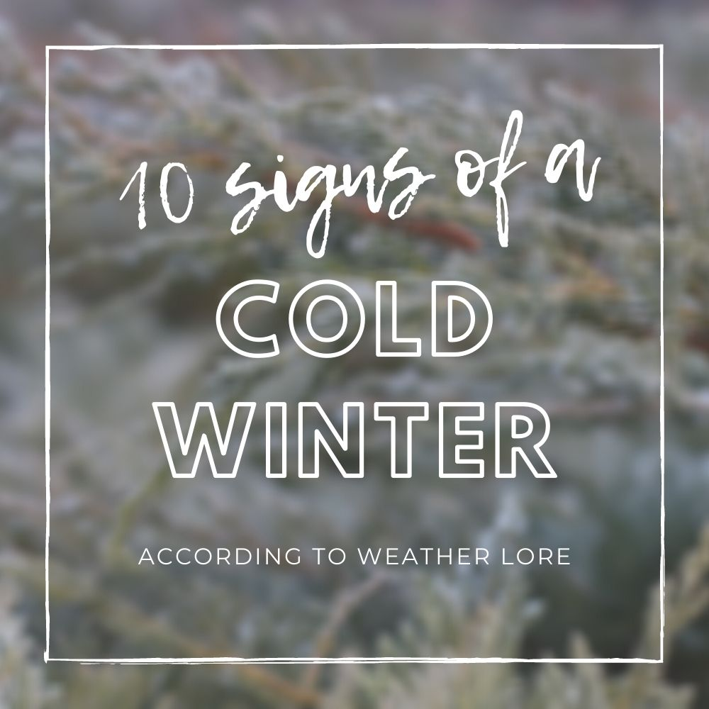 10 Signs of a Bad Winter to Come
