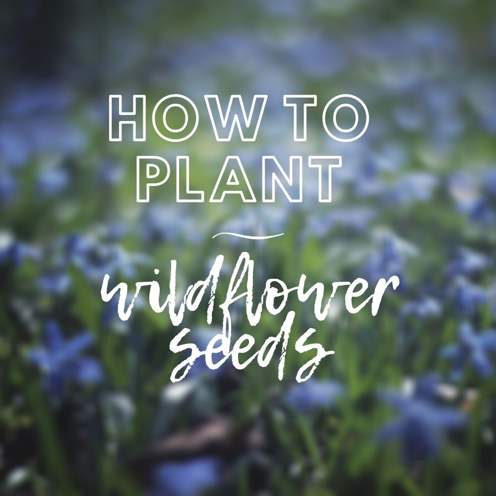 A Guide to Sowing Wildflower Seeds