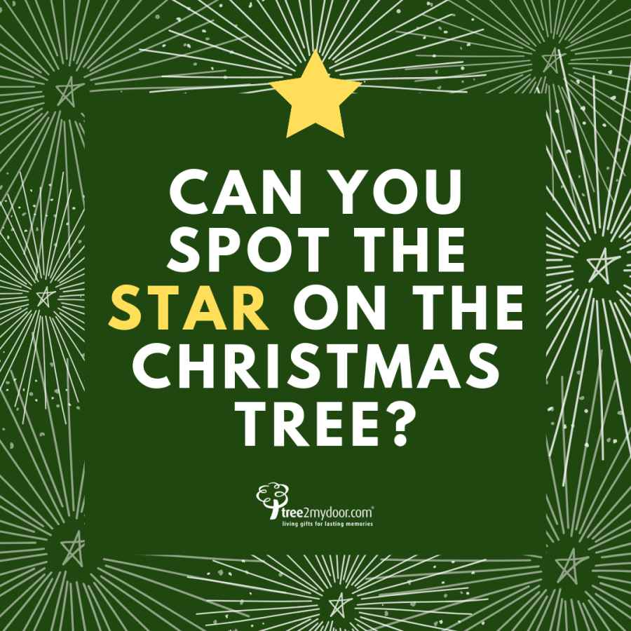 Can you spot the star on top of the Christmas tree?