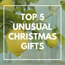 Top 5 Unusual Christmas Gifts