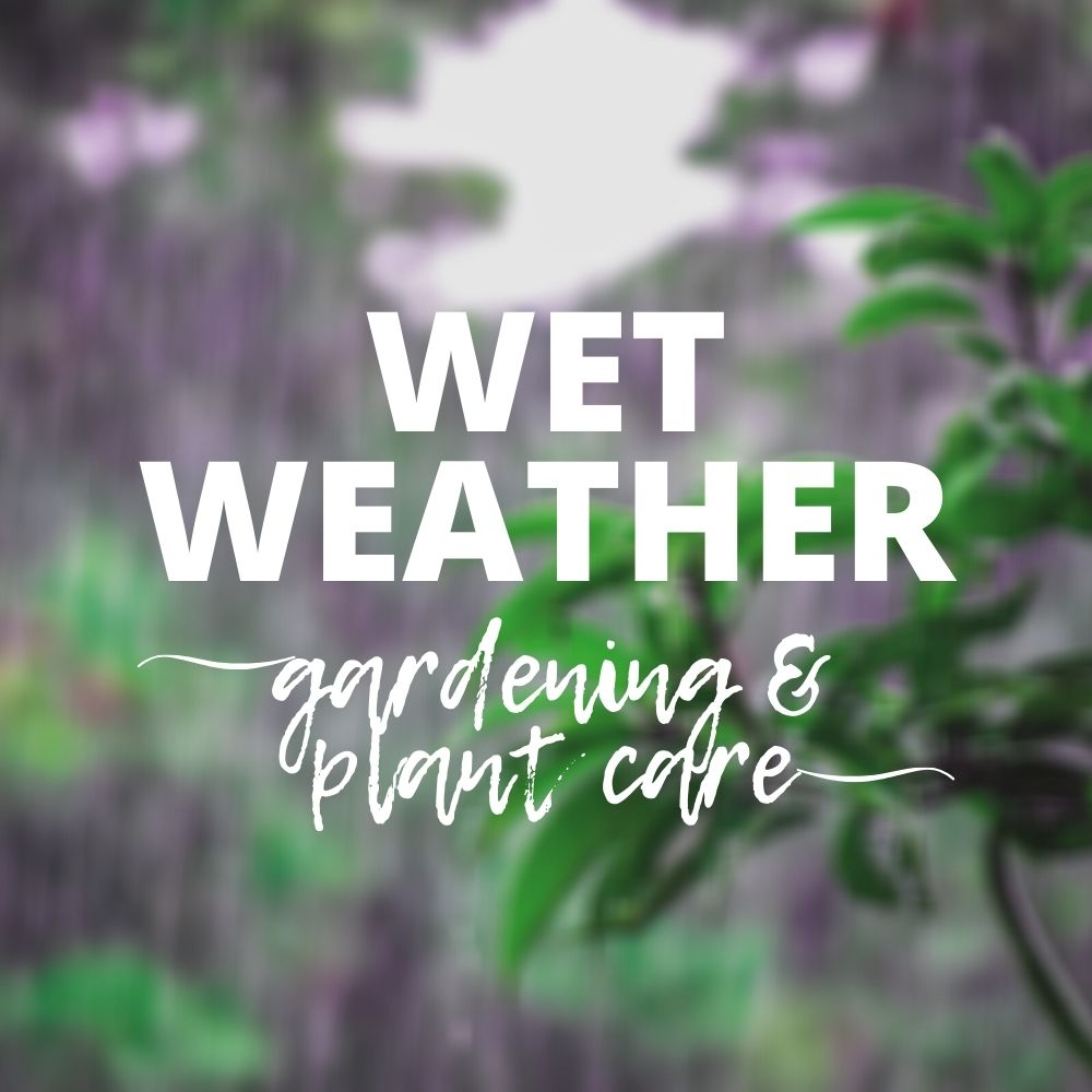 Wet Weather Plant Care - Gardening in the Rain