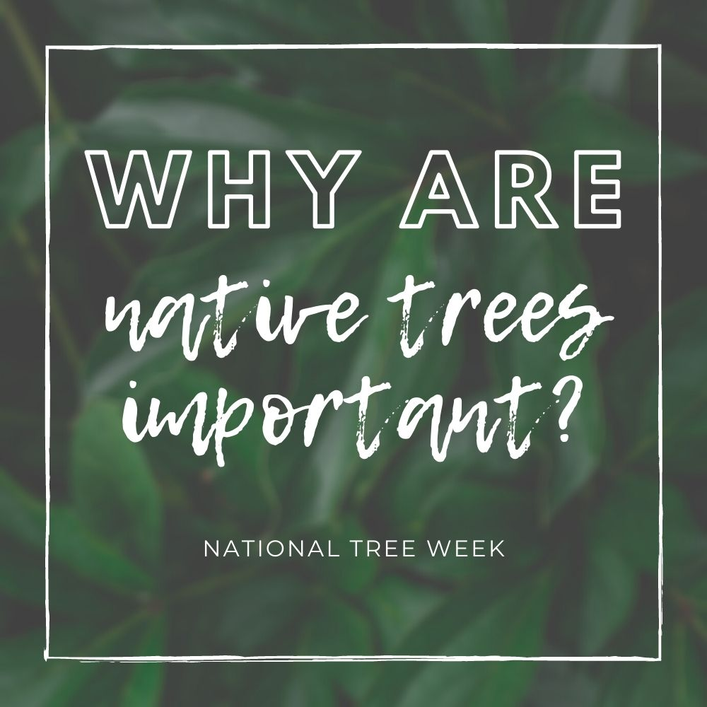 Why are native trees so important?