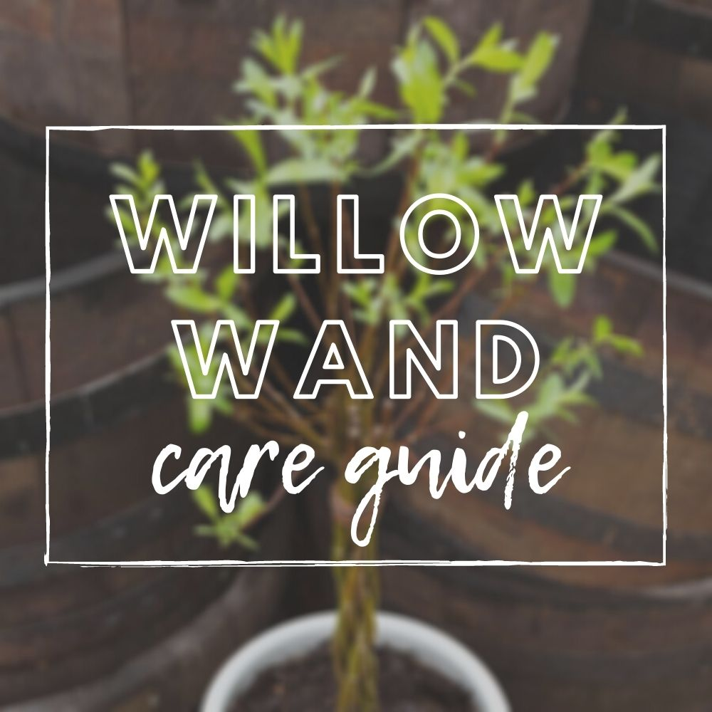 Willow Wand Care Guide