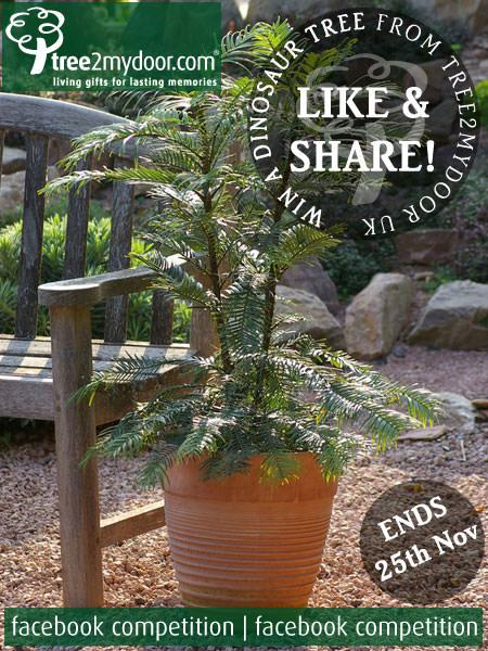 WIN a Dinosaur tree with our Facebook Competition