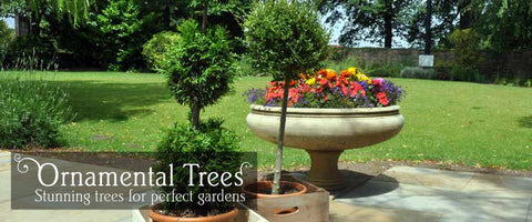 Ornamental Tree Gifts