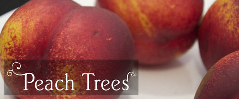 Peach Tree Gifts