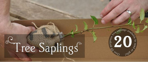 Tree Saplings for Sale