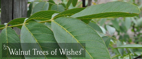 Walnut Tree Gifts