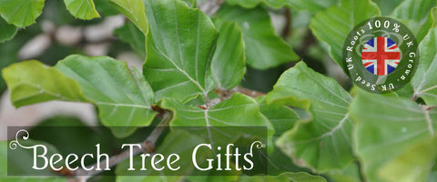 Beech Tree Gifts