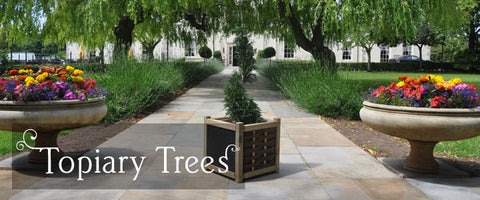 Topiary Tree Gifts