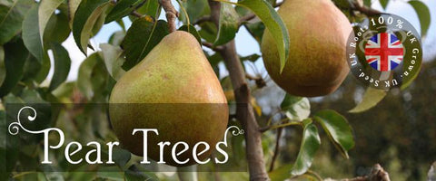 Pear Tree Gifts