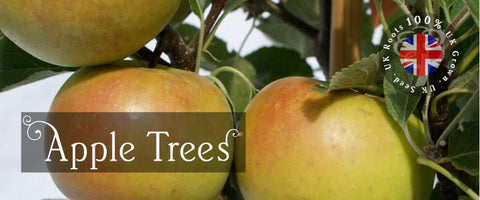 Apple Tree Gifts