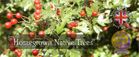 Native Tree Gifts