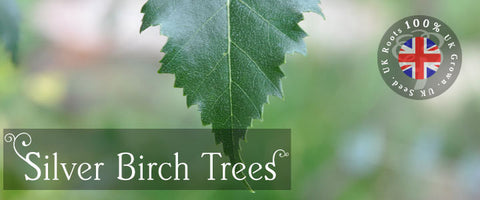 Silver Birch Tree Gifts