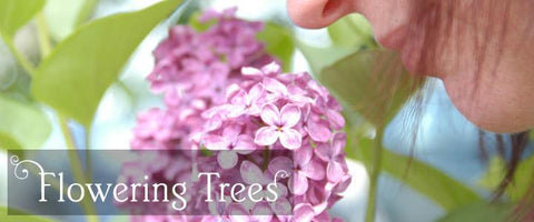 Flowering Tree Gifts