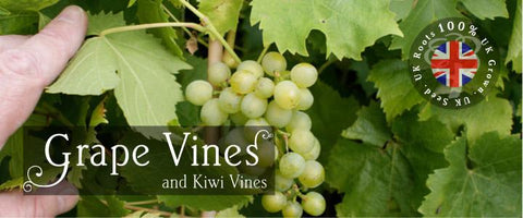 Vines as Gifts