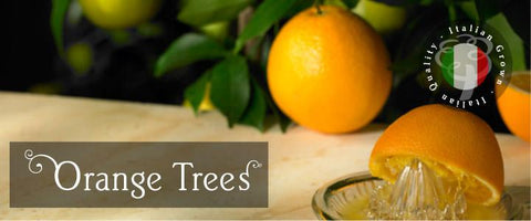Orange Tree Gifts